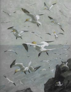 Gannets hanging in the wind, in Land Marks and Sea Wings p 54