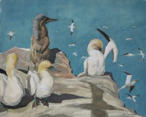 Gannets on the Bass Rock – Watercolour