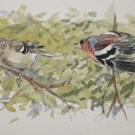 Garden Birds: Chaffinch pair