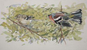 Chaffinch pair 1988