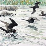 Magnificent Frigate Birds, Giant Tortoise and moorhens I 1999
