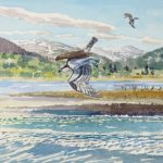 Birds of Prey: Osprey Fishing 1989