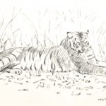 Resting Tiger 1997