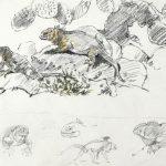 Studies of Land Iguanas