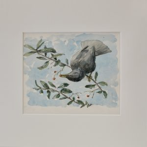 Blackbird on Berries by John Busby