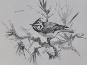 Crested Tit by John Busby