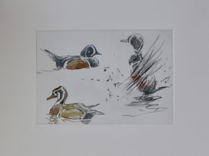 Harlequin Ducks by John Busby