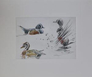 Harlequin Ducks by John Busby