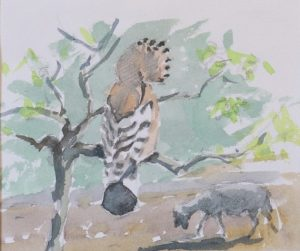 Hoopoe and goat by John Busby