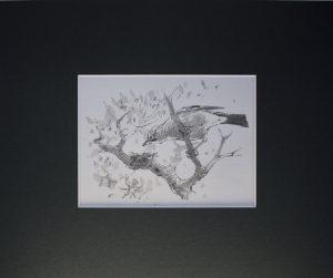 Jay in tree by John Busby