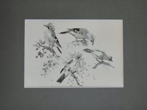Jay studies by John Busby