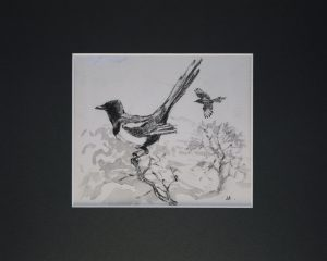 Magpie by John Busby