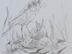 Meadow Pipit and Cuckoo chick by John Busby
