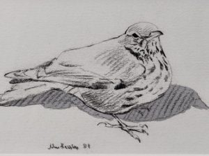 Mistle Thrush by John Busby