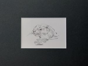 Otter, head above water, by John Busby