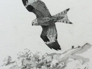 Red Kite flying above fields by John Busby