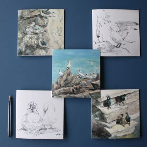 examples of cards in the Seabird Set by John Busby