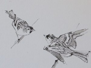 two siskin on twigs threatening each other by John Busby