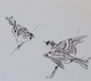 Siskin by John Busby