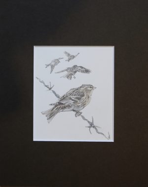 one twite sitting on barbed wire and three flying in background by John Busby