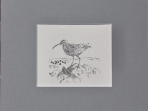 a whimbrel standing on a rock with impression of fields behind by John Busby