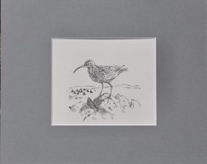 Whimbrel by John Busby