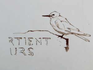 drawing of a Fairy Tern on a sign by John Busby