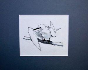Fairy Tern preening by John Busby