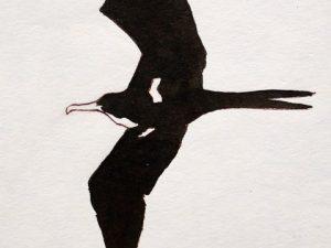 Frigatebird by John Busby