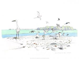 Giclée print of Birds on the Lagoon Shore, Aldabra by John Busby