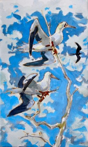 Roosting red footed Boobies with relaxed drooping wings against blue sky by John Busby