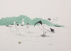 Lithoprint, Sacred Ibis by John Busby