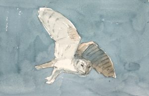 Barn Owl in flight 2 by John Busby