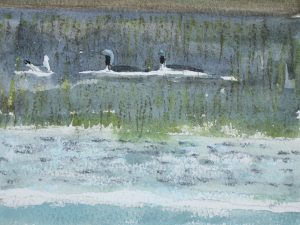 Black-throated Diver and Common Gull by John Busby