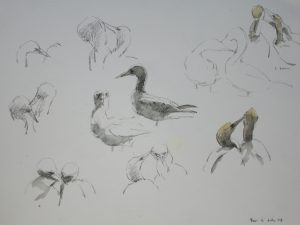 Gannet sketches Bass Rock by John Busby