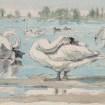 Mute Swans by John Busby