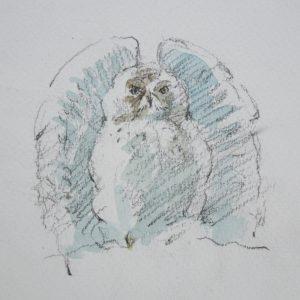 Snowy Owl ruffling feathers by John Busby